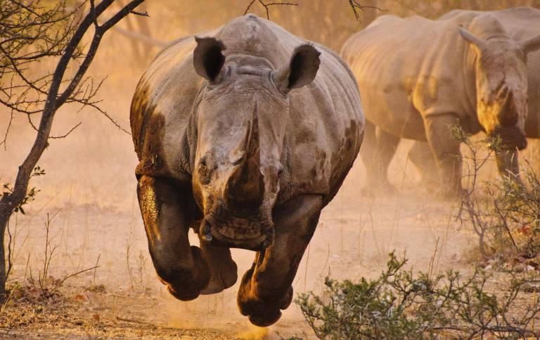 5_rhinoceros